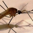 Oxford scientists have developed a novel new malaria vaccine which can protect against the deadly mosquito-borne disease. The vaccine has shown promising results in the first clinical...
