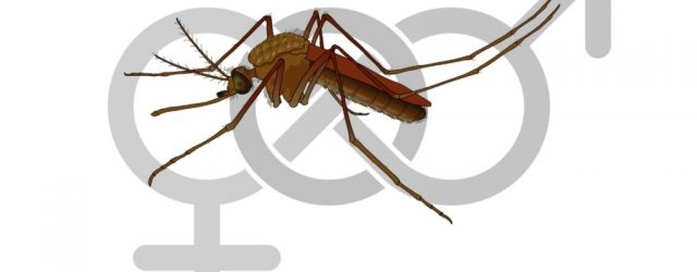 The virus that causes Zika fever can be transmitted through sexual contact long after initial infection as it survives for weeks in semen, according to research undertaken […]