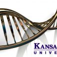 A research team that includes scientists with Kansas State University's Biosecurity Research Institute has developed a promising Zika virus vaccine. The vaccine, a DNA vaccine, is safer and more effective against Zika virus and could offer more […]