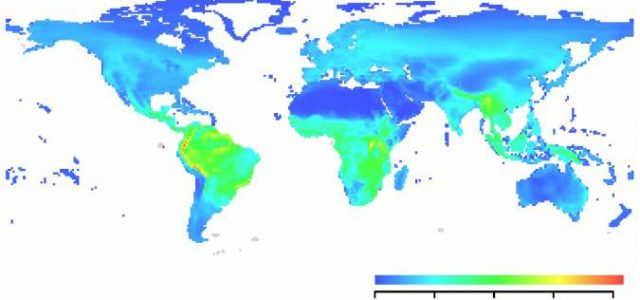 Scientists call attention to a serious lack of data on the worldwide distribution of disease-causing organisms. Without this knowledge, predicting where and when the next disease outbreak will emerge is hardly possible. Macroecologists hold the expertise to […]