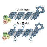 Classic vs new flu virus model. Credit: Nara Lee/Pitt