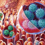 Illustration of membrane-bound vesicles containing clusters of viruses, including rotavirus and norovirus, within the gut. Rotaviruses are shown in the large vesicles, while noroviruses are shown in the smaller vesicles. Credit: NIH Medical Arts